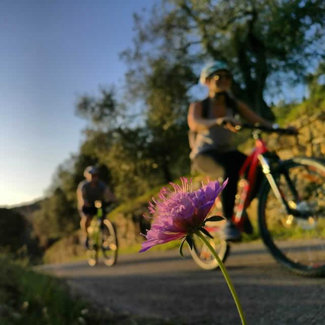bici_fiore